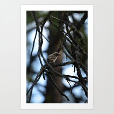 Sweet Sparrow Art Print