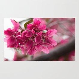 Droplets on Dark Pink Crabapple Blossoms Rug