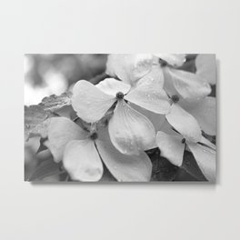 Flowering Dogwood After the Rain Metal Print