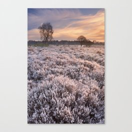 Frosted heather at sunrise in winter in The Netherlands Canvas Print