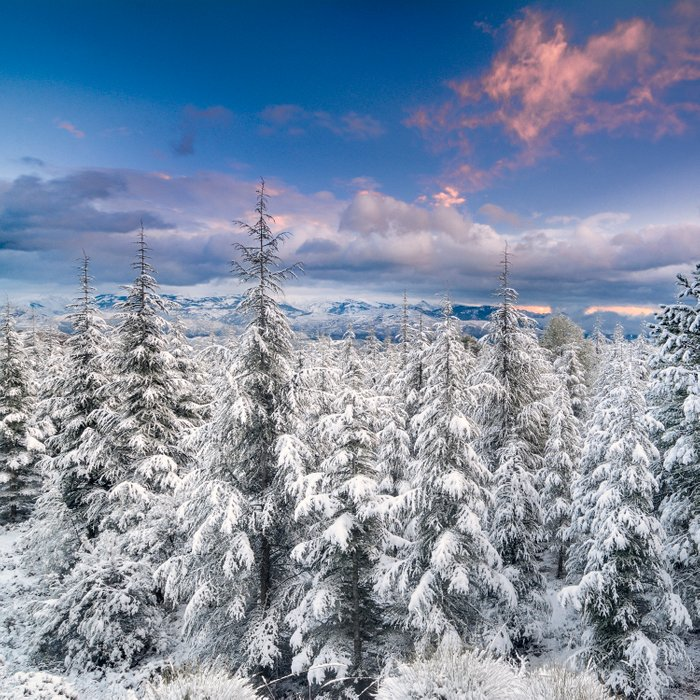 """""""Mountain light"""". Snowy forest at sunset Comforters"""