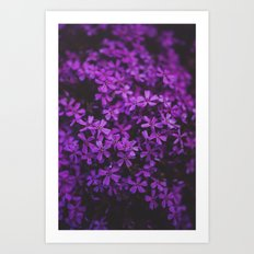 Purple Blossoms Art Print