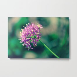 Purple Bloom in Rockwoods Reservation (MDC Area) Missouri Metal Print
