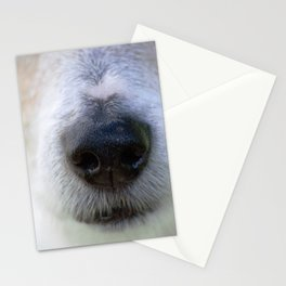 It's a Jack Russell Stationery Cards