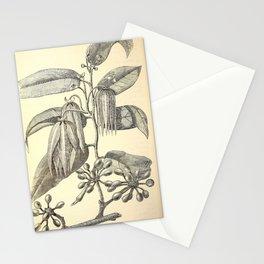 Cananga odorata Stationery Cards
