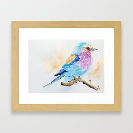 The Fuzzy Ball - Lilac-breasted roller bird Watercolor Painting Print by Nisha Sehjpal Framed Art Print