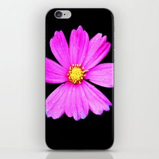 Cosmos Flower Photography Close up Macro iPhone & iPod Skin