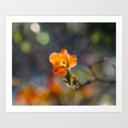 Tiny Orange Bokeh Delight Art Print