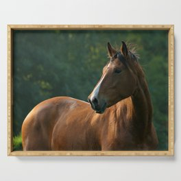 Bay horse Serving Tray
