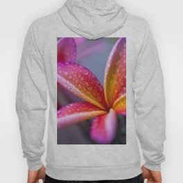 Windows into Nature Hoody