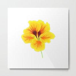 Indian cress flower - illustration Metal Print