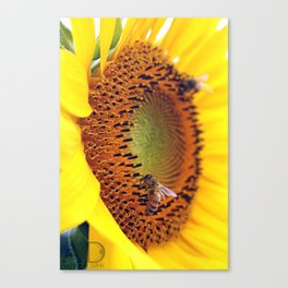 Happy sunflower bees Canvas Print
