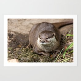 Sunning Otter Art Print