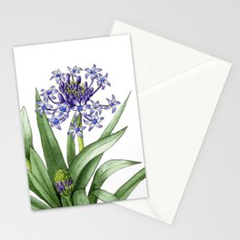 Peruvian Lily Stationery Cards