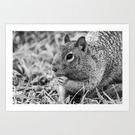 Squirrel Eating Grass  Art Print