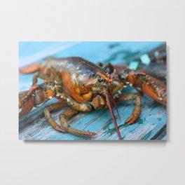 Maine Lobster Metal Print