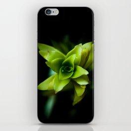 Aptenia succulent plant iPhone Skin