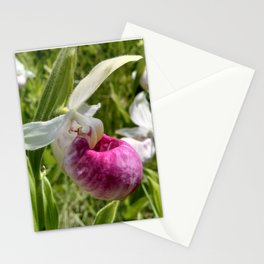 Showy Lady's Slipper Stationery Cards