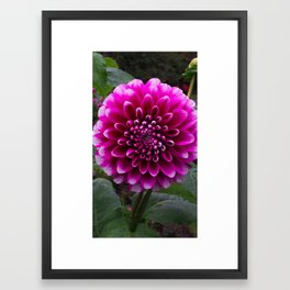 Flower in the park Framed Art Print
