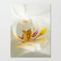 Looking into the Orchid Canvas Print