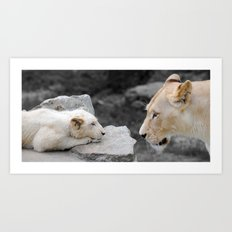 A Mothers Love . . . White Lion Mother and her Cub    Art Print