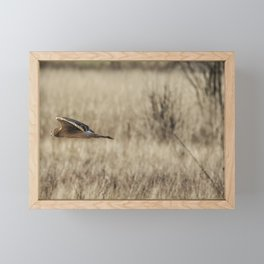 Northern Harrier Hunting, No. 3 Framed Mini Art Print