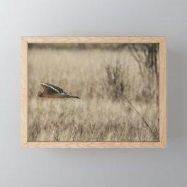 Northern Harrier Hunting, No. 3 Framed Mini Art Print