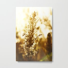 Summer Days Metal Print