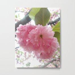 Korean Pink Flower Metal Print
