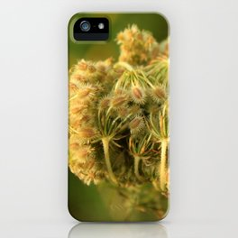 Queen Anne's Lace Flower About to Bloom iPhone Case