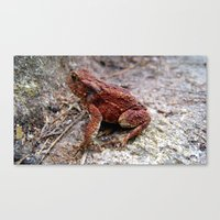 frog Canvas Prints featuring frog. by zenitt
