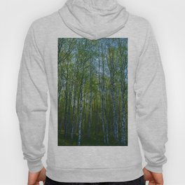 birch forest in the spring morning Hoody