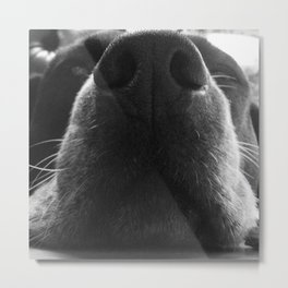 Beagle Nose Metal Print