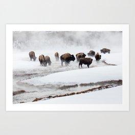 Yellowstone National Park - Bison Herd Art Print