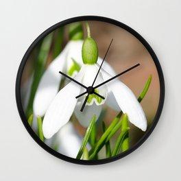 Snowdrop macro Wall Clock