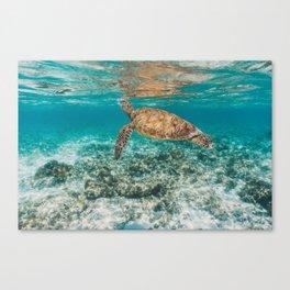Turtle ii Canvas Print