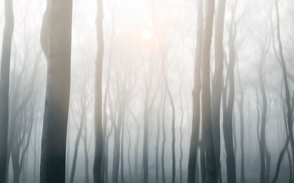 Art Print - Foggy morning - Viviana Gonzalez