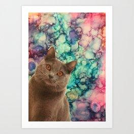 Beautiful Grey Cat Art Print
