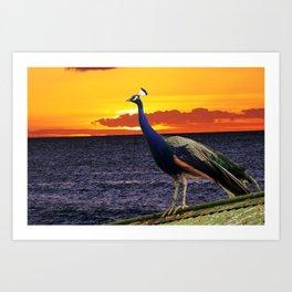 Peacock Ocean Art Print
