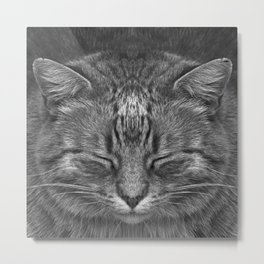The big Kahuna - My big Ginger Cat Metal Print