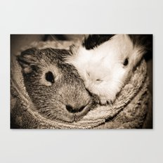 Guinea Pig Love Canvas Print
