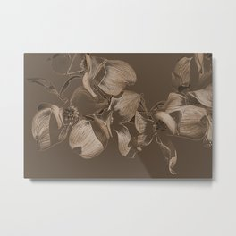 Dogwood Tree Flowers (sepia) Metal Print