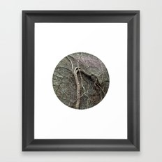 Planetary Bodies - Vines Framed Art Print