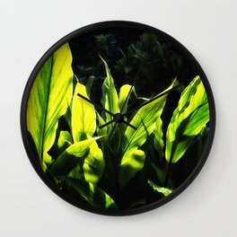 Ginger leaves in the Sun wet with rain Wall Clock