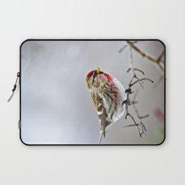 Winter Redpoll Bird Laptop Sleeve
