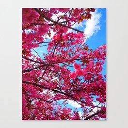Pink Spring Canvas Print