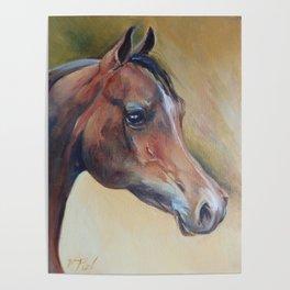 Arabian Horse portrait Brown horse head Oil painting Poster