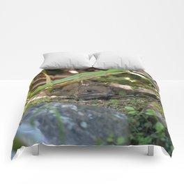 Tuatara : Nw Zealand Endemic Comforters