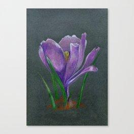 SIngle crocus flower sketch  hand drawing Canvas Print