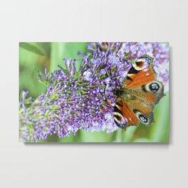 Butterfly XI Metal Print